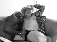 Mature blackbear cocksucking chubby cock