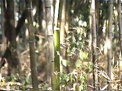 Дрочить бамбука