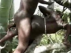African amateur poke on the tree