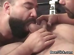 Gay hairy men pumping iron and sucking cock part2