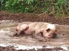 Porky ' s