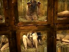 כלוב - ארנבות מזעזע