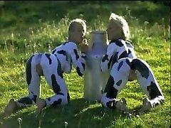 يبتسم الأبقار