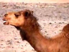 arabian desert camps pt1