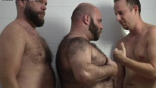 Bearded Cubs and Bear Celebrities