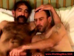 Two hairy only little coco bears cuddeling ends up with fellatio