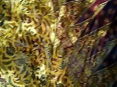 urin razširila na indian ashleigh gee sarong