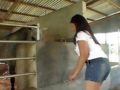 Paardrijden Aziatische pik in de stallen