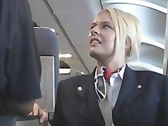 American stewardes fantasy